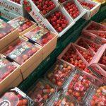 7月11日(火)はまテラスフェスティバル出店者のご紹介です