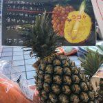 8月8日(火)はまテラスマルシェ出店者のご紹介です!